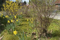 03.04.2021 - es wird langsam Frühling, auch wenn es kalt ist.