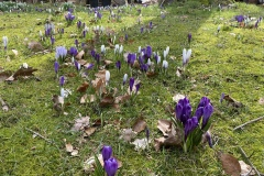 21.03.2021 - Frühlingsanfang: Jedes Jahr werden sie mehr.