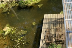 24.07.2021 - Ein Blick vom Schuppendach auf den Teich in der Juli-Sonne.